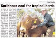 Carribean cool for tropical herds -