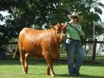 Katrina leading 26month heifer - Pinnacle Pocket Bella at Mareeba Rodeo Interbreed 2010 -