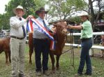 Becky Grand Champion Bos taurus cow Cairns 2010 -